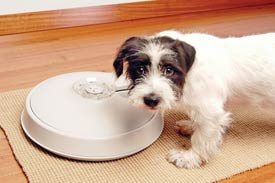 The Automatic Pet Feeder