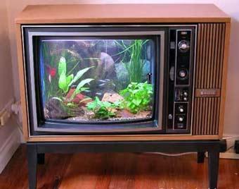 Turn our aquarium into a TV