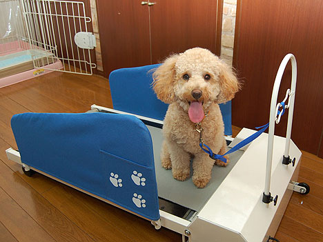 The Doggy Treadmill