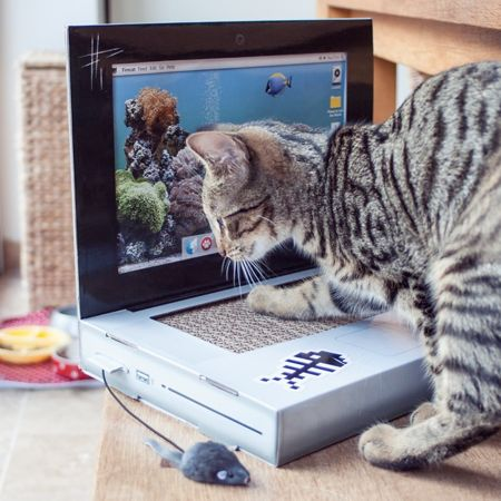 cat-scratch-laptop