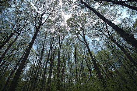 mechanical-trees