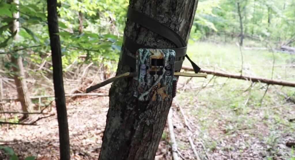 Browning Strike Force Pro XD 24MP on tree
