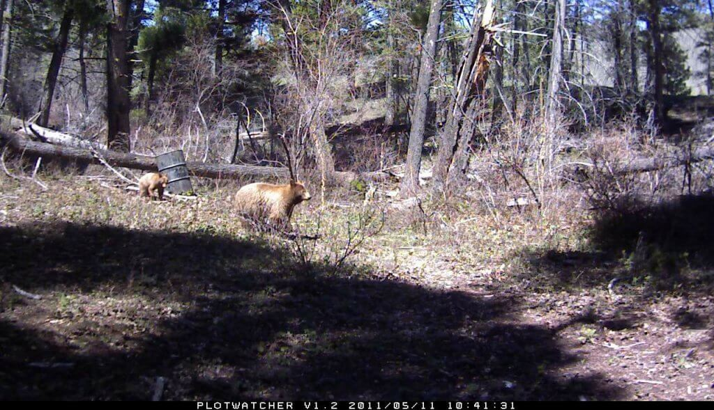 Day 6 Plotwatcher Game Surveillance System sample image of wild game