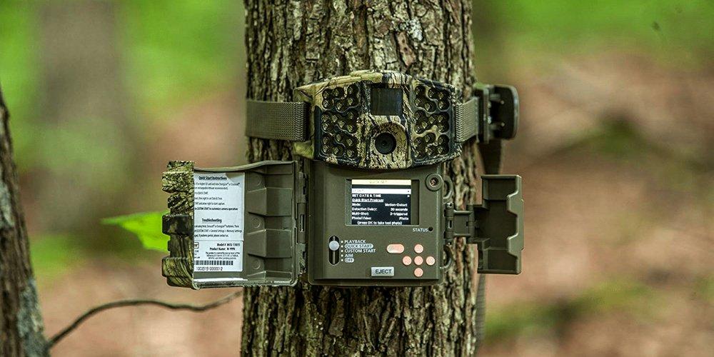 Trail Camera on Tree