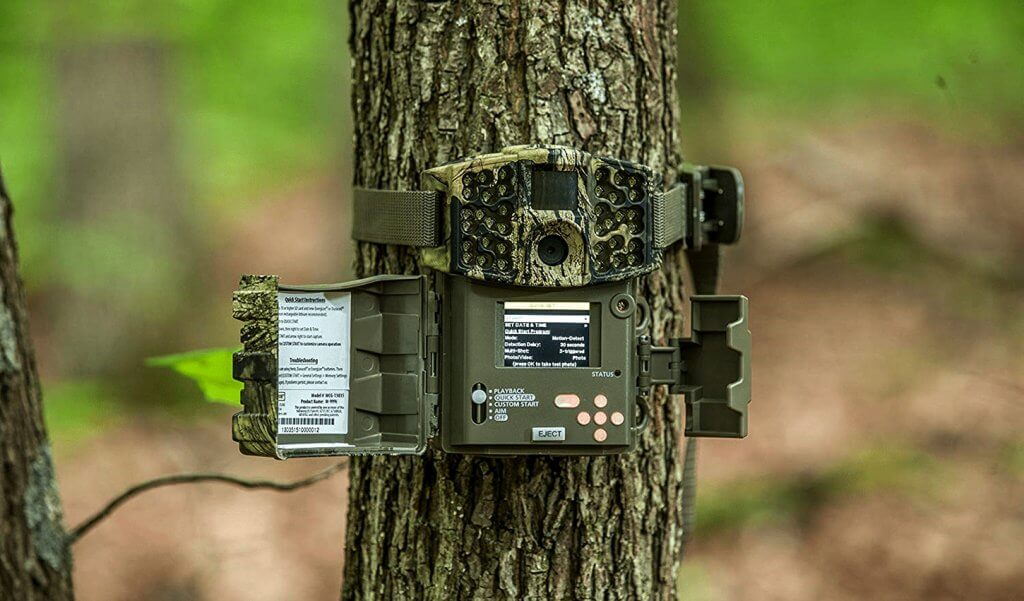 Trail Camera on Tree