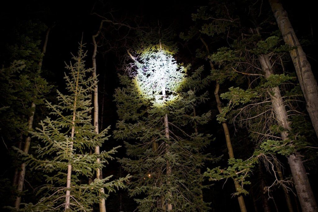 J5 Tactical V1-PRO Flashlight shining light on a tree
