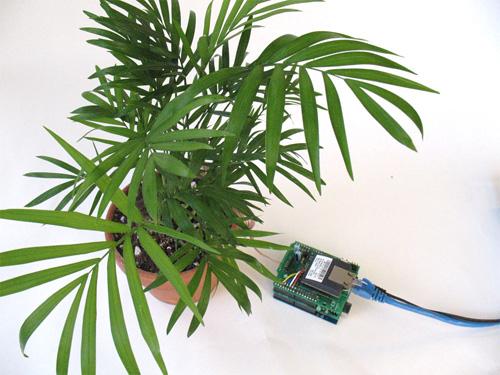 botanicallsplant_lrg.jpg