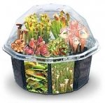 Desktop Carnivorous Plant Set