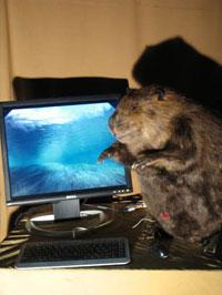 compu-beaver.jpg