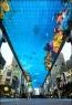 World's Largest Virtual Fish Tank