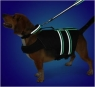 Lunabrite Collar and Lead make your dog visible in the dark