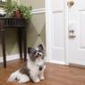 Smart Pet Doorbell